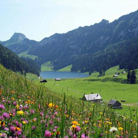 Bild 2 Chüeboden Sämtisersee mit Blick auf Alp Soll  Foto Paul Broger  2016. Vergrösserte Ansicht