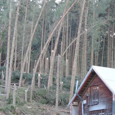 Bild 1: «Vaia» hat in diesem Waldrand auf der «Lemerenwees», Gontenbad, zahlreiche Fichten geradezu abgerupft.. Vergrösserte Ansicht